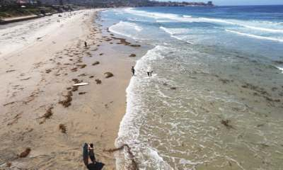"alt=""Sea life in 'peril' as ocean temperatures hit all-time high in San Diego"""