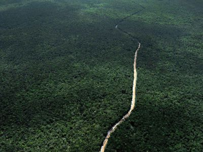 "alt=""How to Make Money Off Rainforests Without Cutting Them Down"""