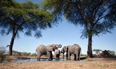 "alt=""Namibia forced by drought to auction 1,000 wild animals"""
